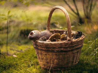 """Новинки для грибників: кошики і рюкзаки, ножі грибника та футболки з грибами від ТМ """"Acropolis"""""""