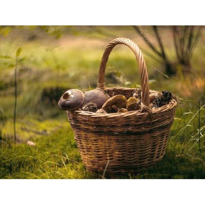 "Новинки для грибников: корзины и рюкзаки, ножи грибника и футболки с грибами от ТМ ""Acropolis"""