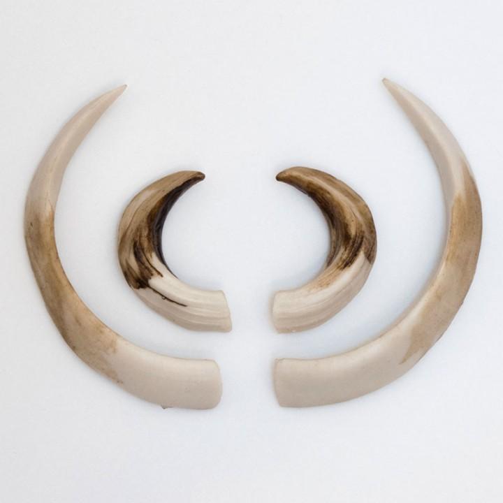 Искусственные клыки кабана ИК-1